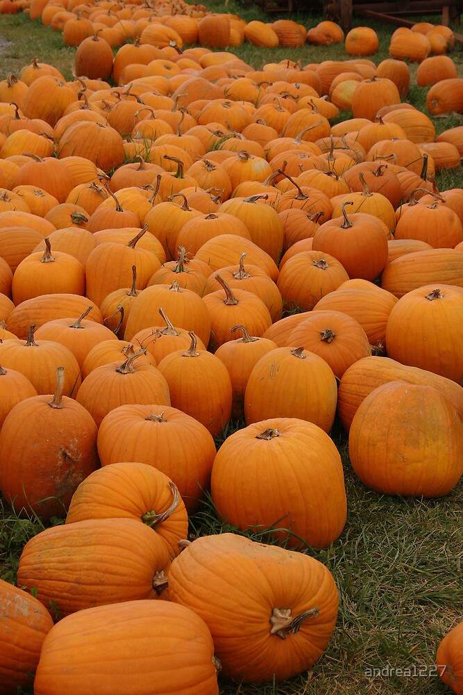 Punkin' Patch by andrea1227