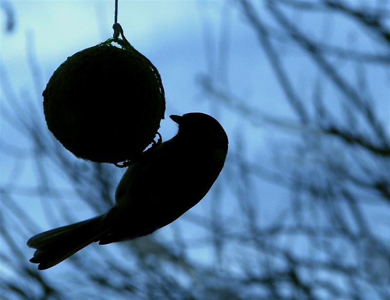 Bird having a ball by Loklok