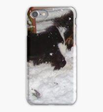A Snow Dog iPhone Case/Skin