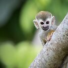 Baby Squirrel Monkey by Rob Lavoie