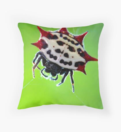 spiny-backed orbweaver Throw Pillow