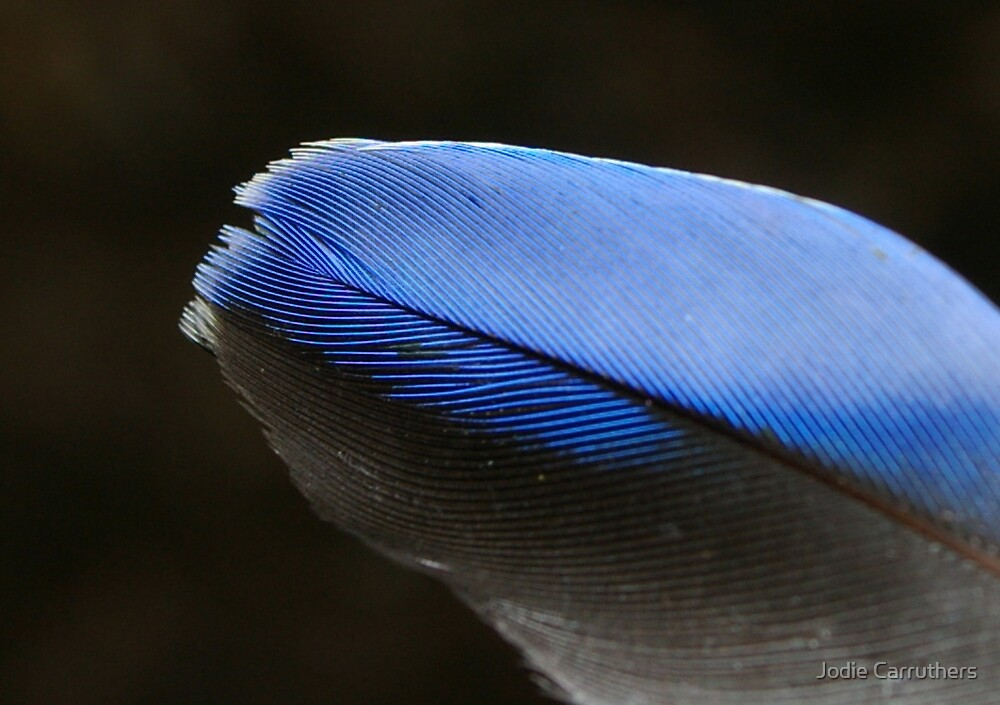 blue feather  by Jodie Carruthers