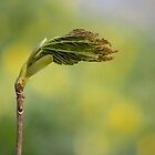 Spring is Here by Jo Nijenhuis