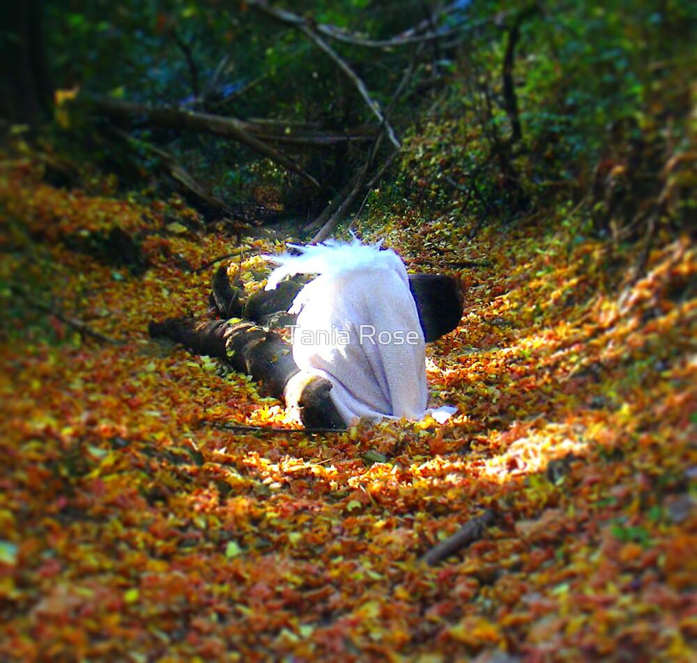 Angeldan by Tania Rose