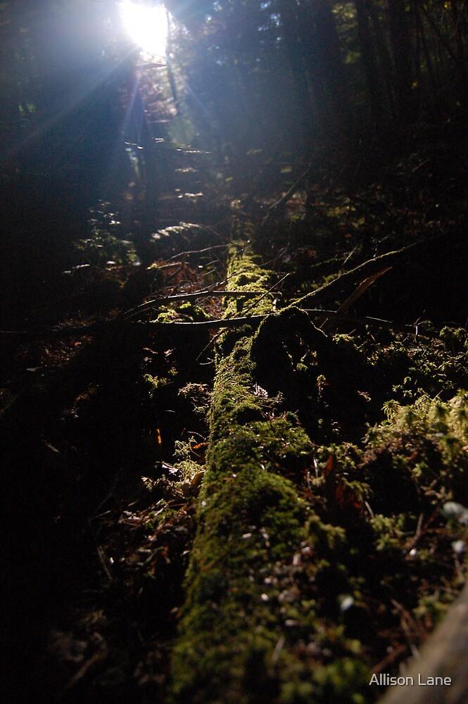 Morning Moss by Allison Lane