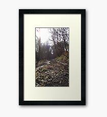 Tranquil woodland Framed Print