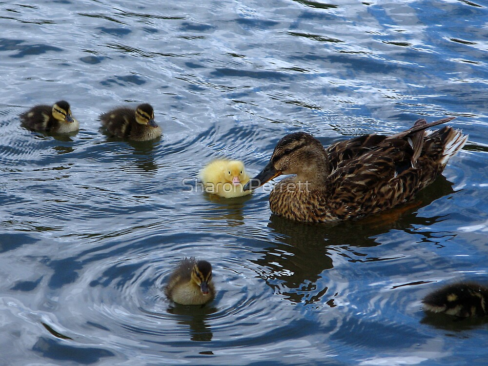 A family outing by Sharon Perrett
