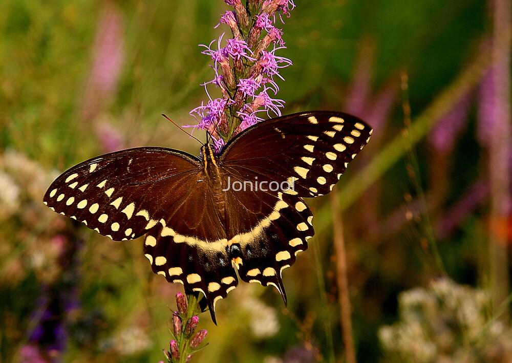 Sunlit Beauty by Jonicool