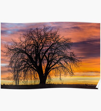 Cotton Wood Sunrise Poster
