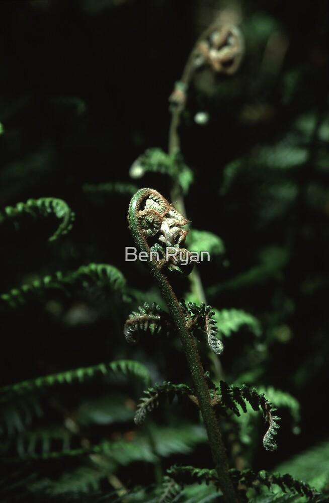 Fronds by Ben Ryan