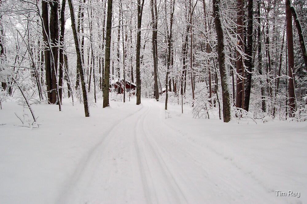 Ski Trail by Tim Ray