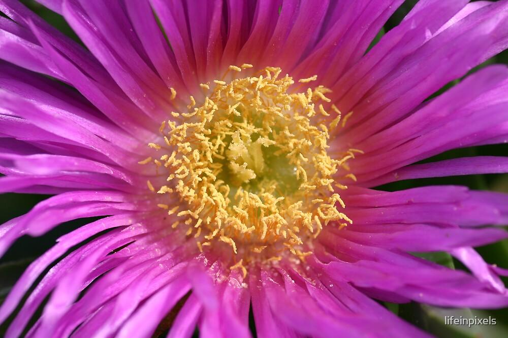 Flower by lifeinpixels