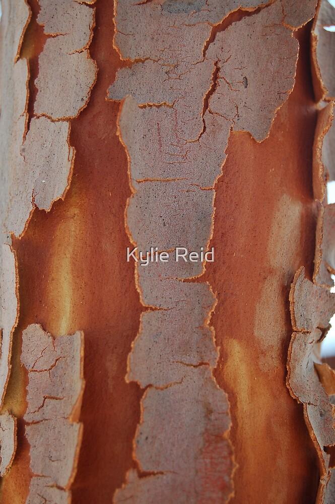 Shedding Skin by Kylie Reid