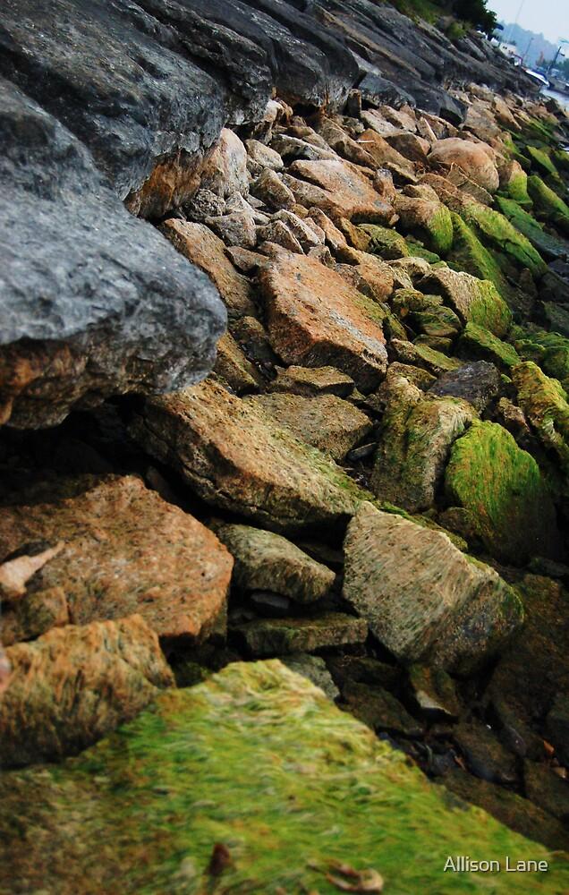 Rocks by Allison Lane
