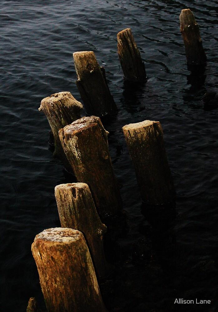 Water Logged by Allison Lane