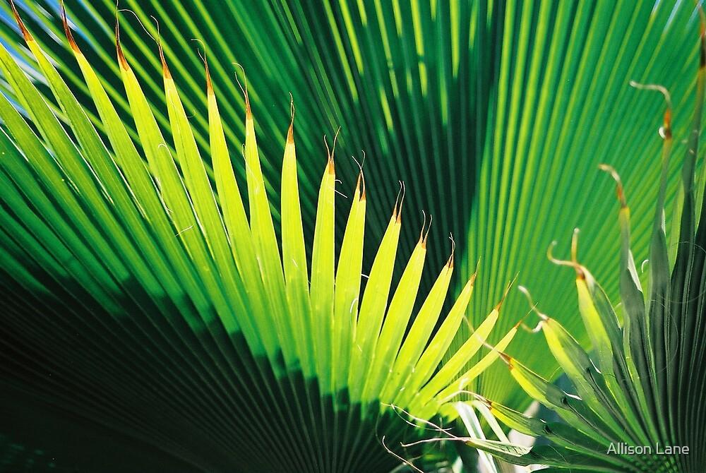 Palms by Allison Lane