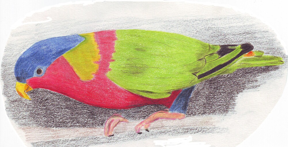 Parrot 1 by Ruth Bretherick