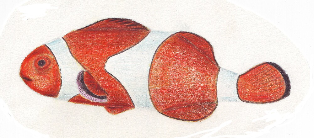 Clown Fish by Ruth Bretherick