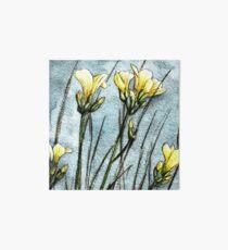 Feld Blumen in der Dämmerung Galeriedruck