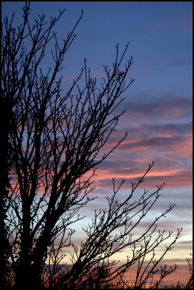 Sunset and tree by Melody Shanahan-Kluth