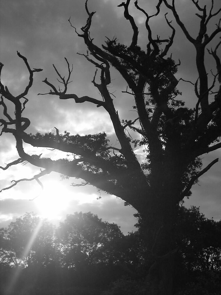 Skeleton tree by gemmagrace