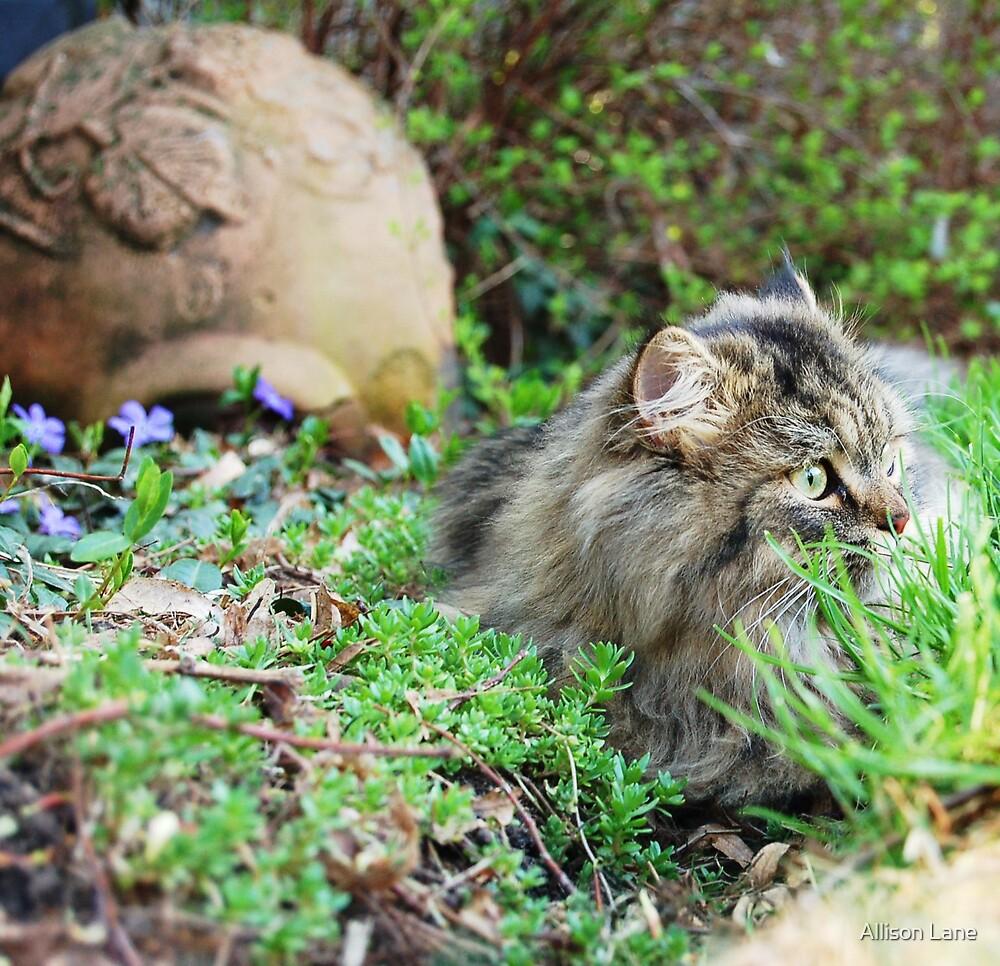 Cat by Allison Lane