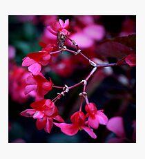 Colour Of Life VII Photographic Print