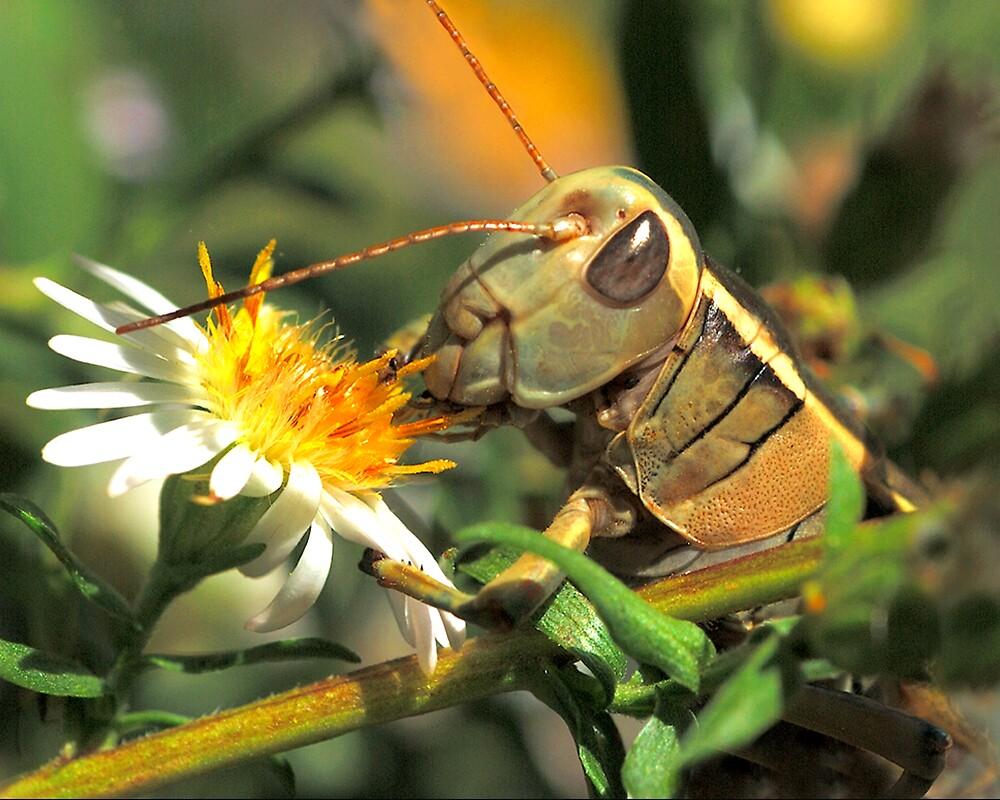 Grasshopper Picnic by Ken  Aitchison
