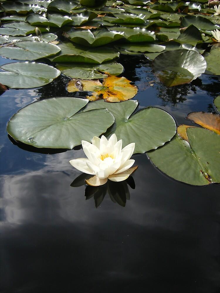 lilly on sky by gemmagrace