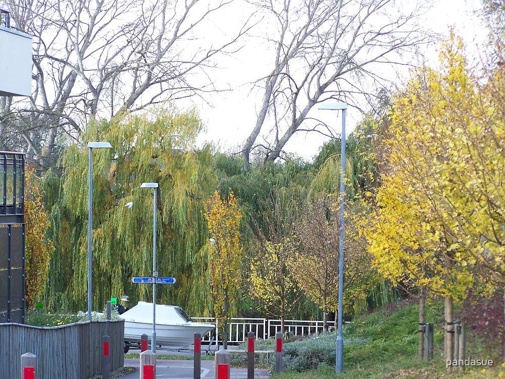 trees by pandasue