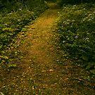Follow Me...  by Sherstin Schwartz