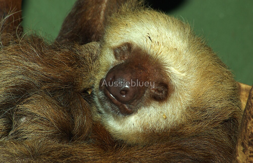 Sleeping Sloth. by Aussiebluey