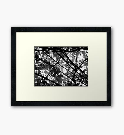 Natural Abstract Framed Print