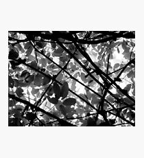 Natural Abstract Photographic Print