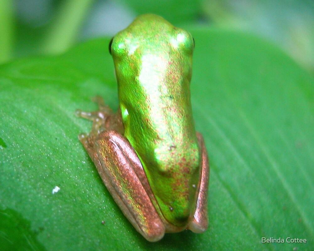 shimmering green frog by Belinda Cottee