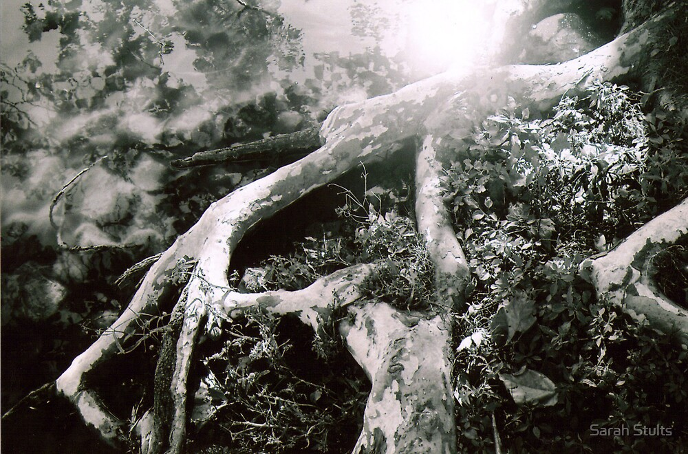 Image in Tree Roots by Sarah Stults