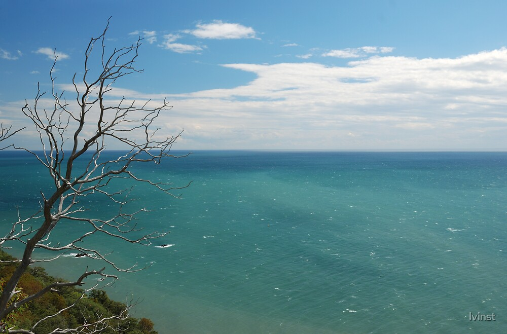 Tree on edge of cliff by lvinst