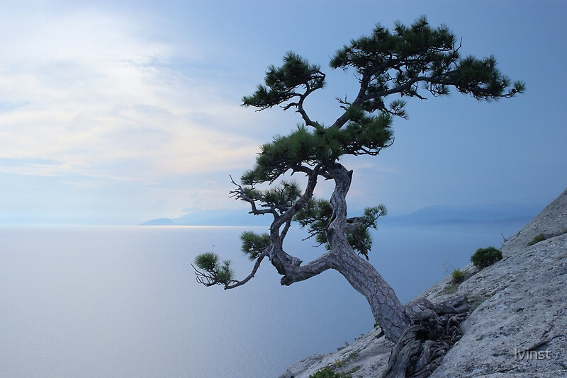 Quot Alone Tree On The Cliff Quot By Lvinst Redbubble
