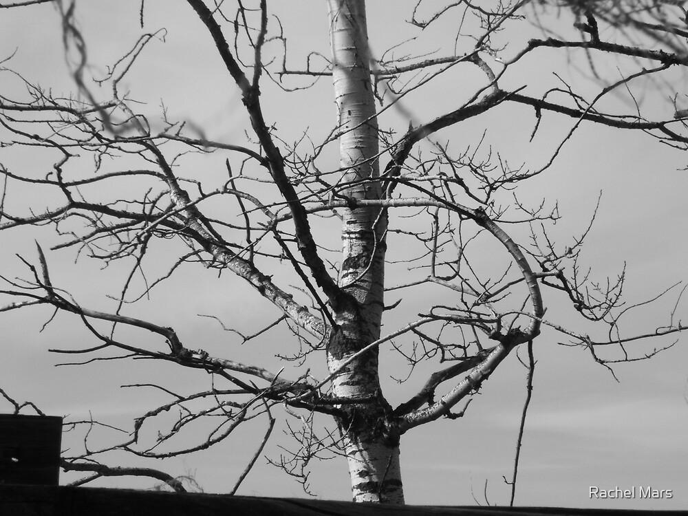 Gnarly Tree by Rachel Mars