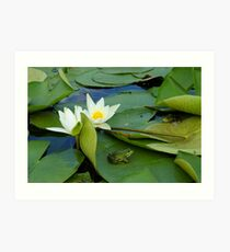 Frogs sitting on the water lily pads Art Print