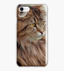 Maine Coon Cat Artwork iPhone Case/Skin