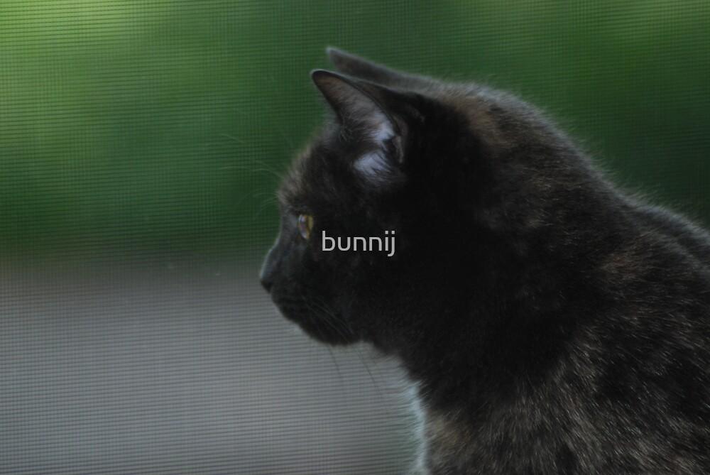 Attentive by bunnij