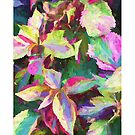 """""""Cool Coleus"""" by kcd-designs"""