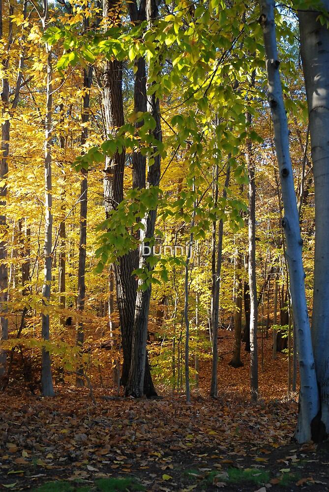 Golden Woods by bunnij