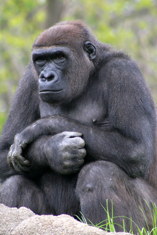 The Thinker by Jerry Andersson