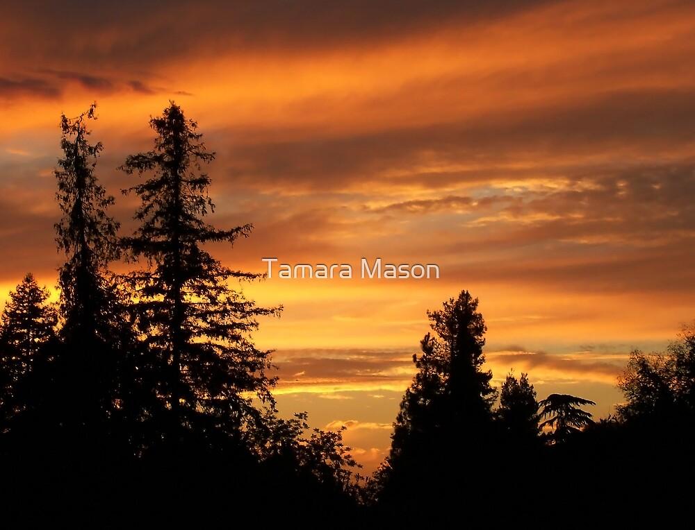 Red Twilight by Tamara Mason
