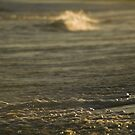 Shoreline Detail, Afternoon Light, East Coast Australia by Paul Foley