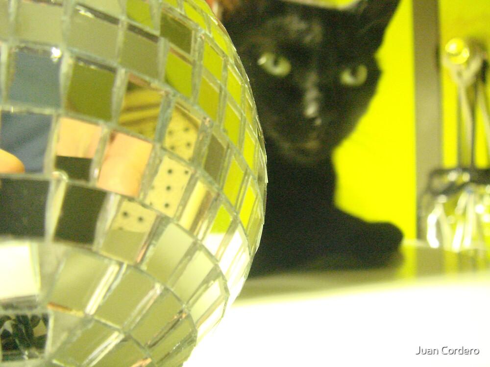 Disco Pussy by Juan Cordero