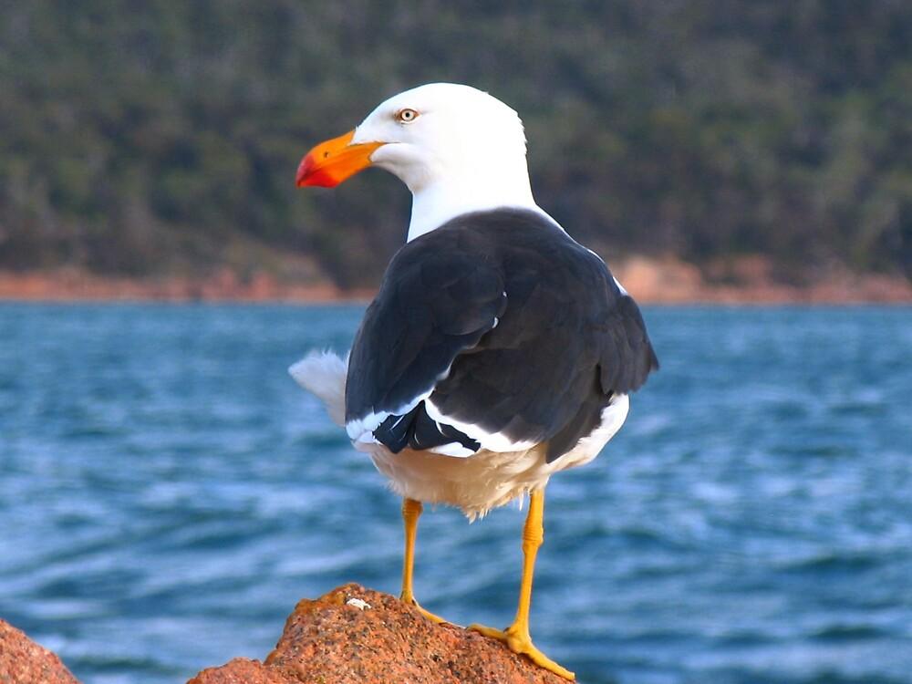 Gull in a Gale by ThomasMcG