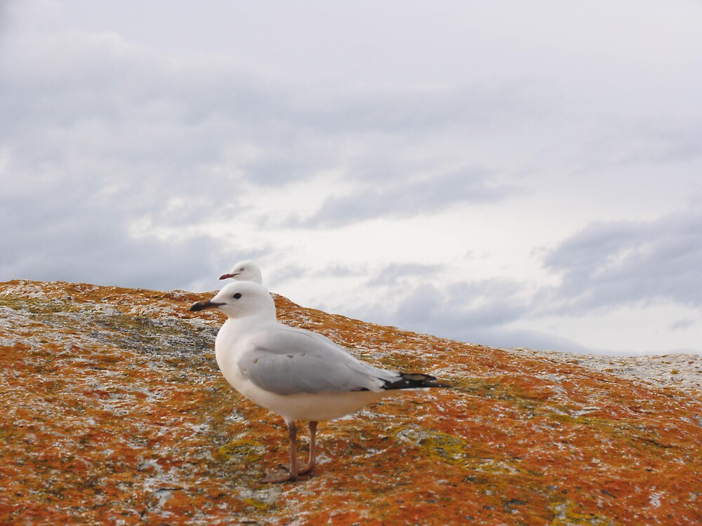 Two Headed Sea Gull by ThomasMcG